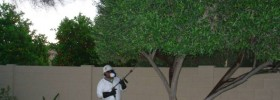 Pest control / Fertilization
